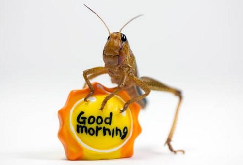 lutter-blatte-insecte