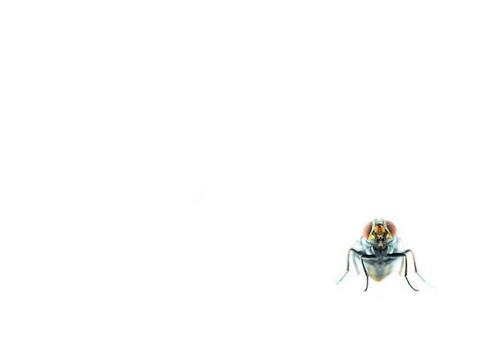 mouche-insecte-lutter