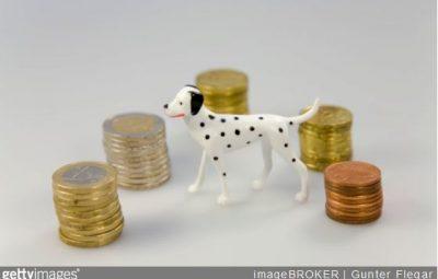 adopter-chien-quel-budget-soins-alimentation-accessoires