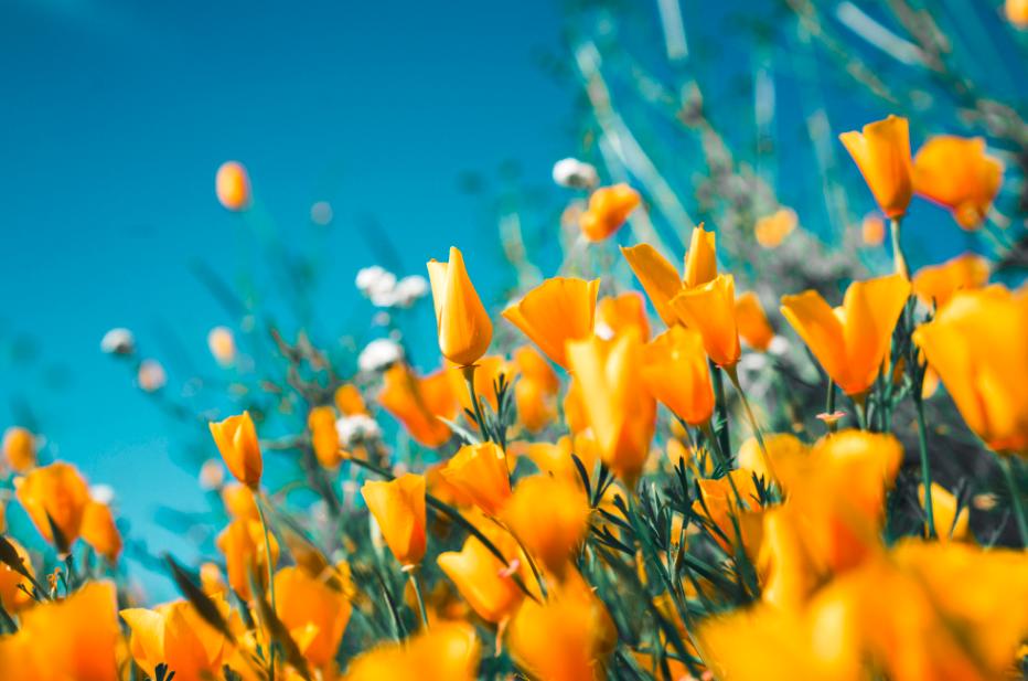 Fleurs jaunes parc fond ciel bleu