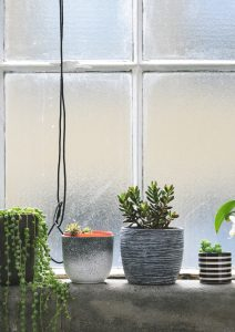 Pots de plantes vertes devant une fenêtre