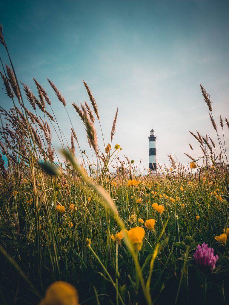 Le phare d'oléron devant un champs de fleurs
